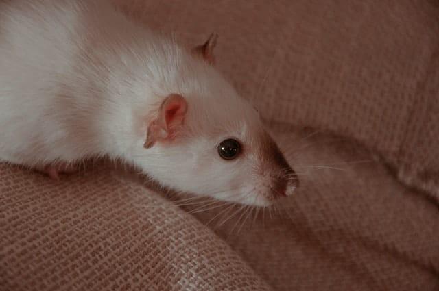 Comment éviter les insectes et les souris dans votre espace de stockage